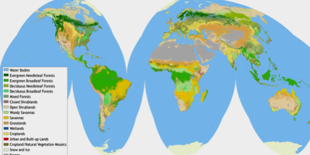 global Landcover